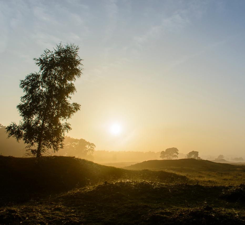 zonsopgang Veluwe_stuifzand